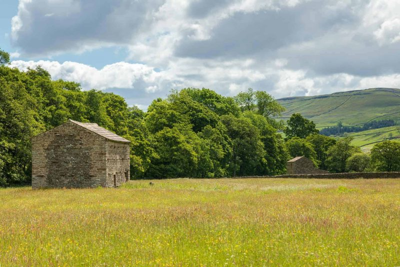 Swaledale flower meadows print