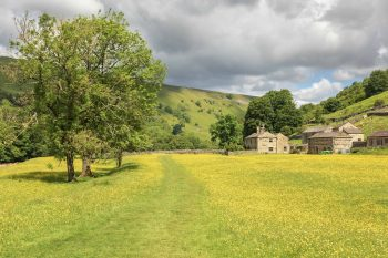swaledale meadows print